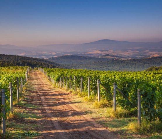 chianti-vineyard-tuscany-italy